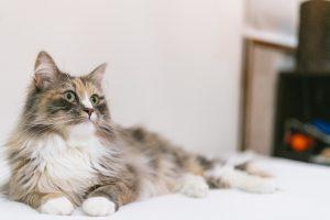 cat9302332_TP_V
