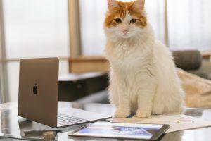 cat9302345_TP_V